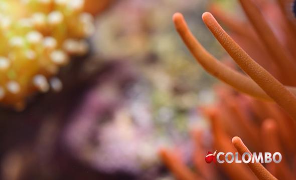 hoe te kopen kosten charme loop schoenen Reef Salt - Colombo